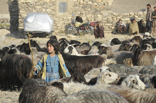 The Sheep Girl by Dean Grondo