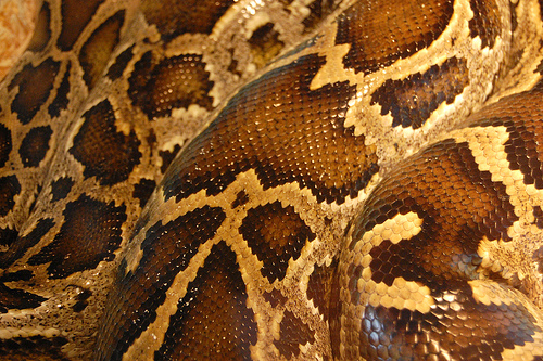 """Snake"" (photo by Flickr user Steve Lodefink)"