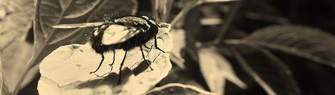 Burying Fly Again by Corey Mesler