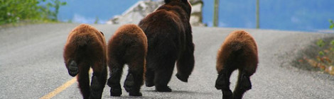 """Bear bums"" image by Flickr user Jethro Taylor"
