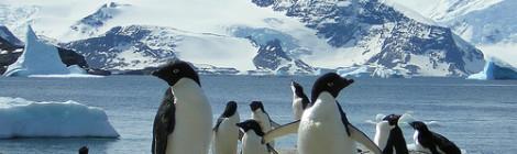 The New Penguin Exhibit by Stephanie Waite