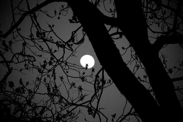 """""""Moon thru pecan tree"""" image by Flickr user Melinda Shelton"""