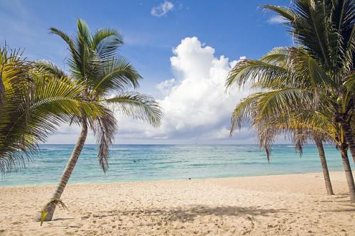 """""""Beach Palm Trees Riviera Maya"""""""