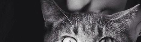 The Cat Lady by Keava McMillan