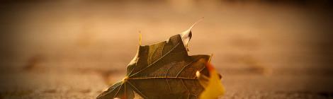 September by Ramesh Dohan